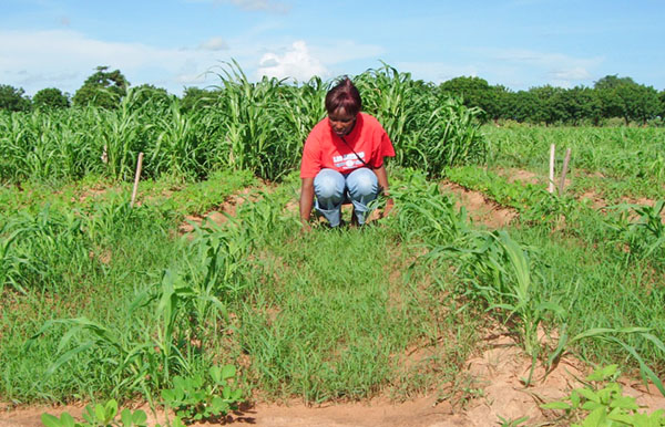 A Malian agronomy student inspects fields planted with multiple crops.