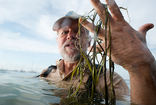 Holding strands of loose native pondweed that floated to the surface, Steve Carpenter, professor of zoology and director of the Center for Limnology at the University of Wisconsin-Madison, is pictured in Lake Mendota near the campus. (Photo by Jeff Miller.)