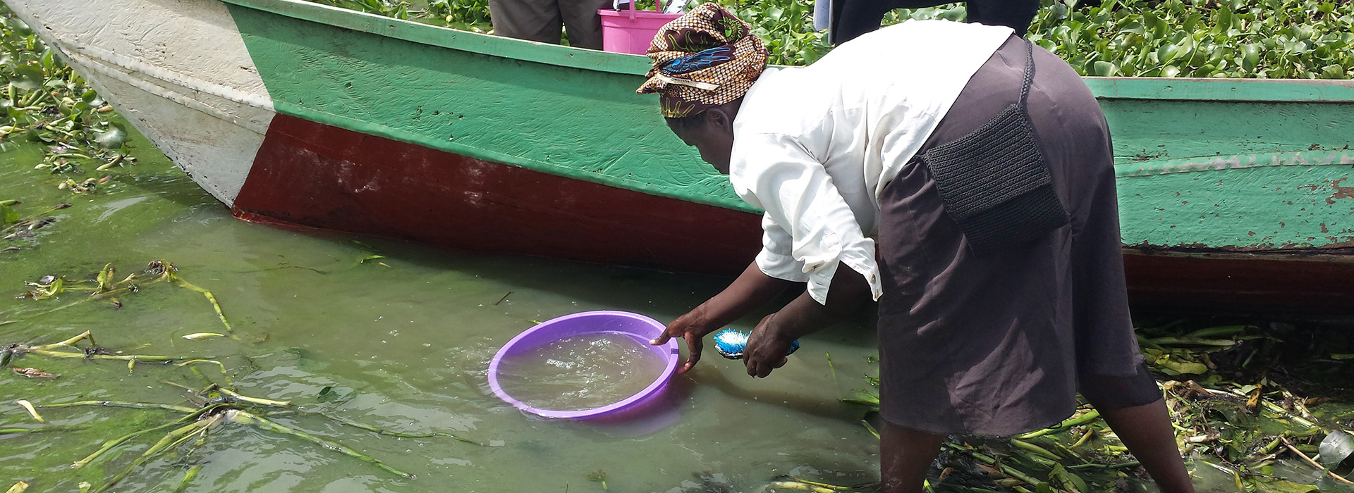 Woman gathering water from Lake Victoria in purple plastic dish