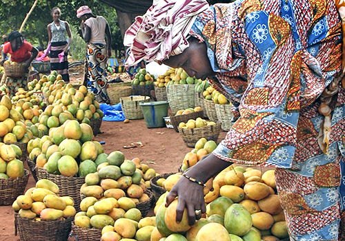 Woman examining mango at a market