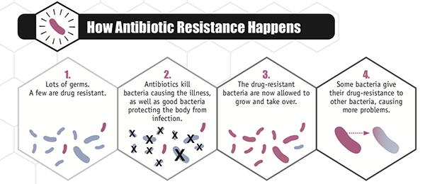 A series of illustrations show how antibiotic resistance happens, from lots of germs. A few are drug resistant to Some bacteria give their drug resistance to other bacteria, causing more problems.