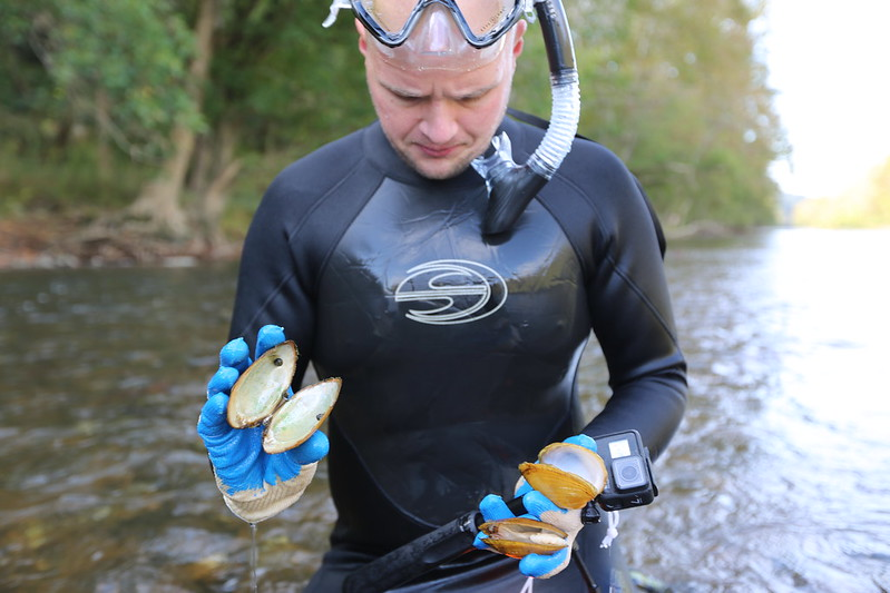 A diver holds dead mussel shells.