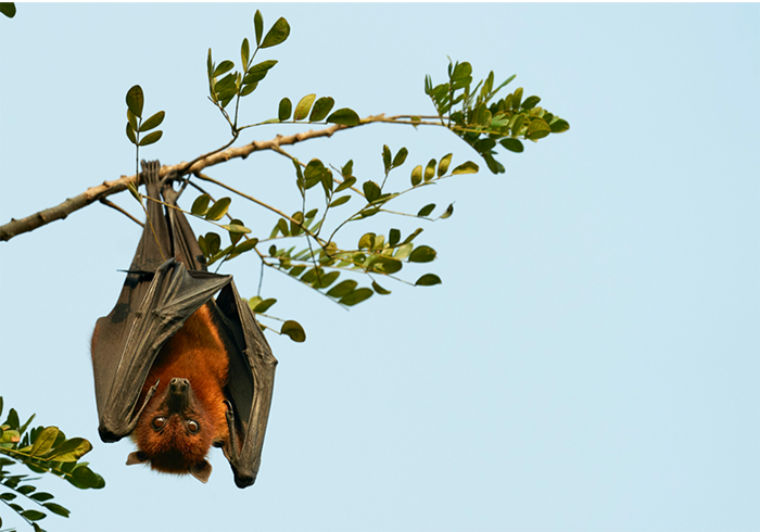 A bat hangs from a tree branch.