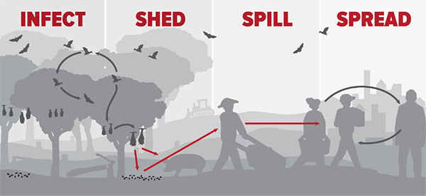 A graphic shows the infect-shed-spill-spread cycle.